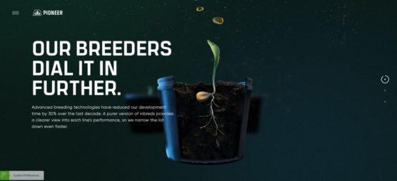 sfwpexperts.com-Award-Winning-Best-website-designs-Pioneer-Corn-Revolutionized